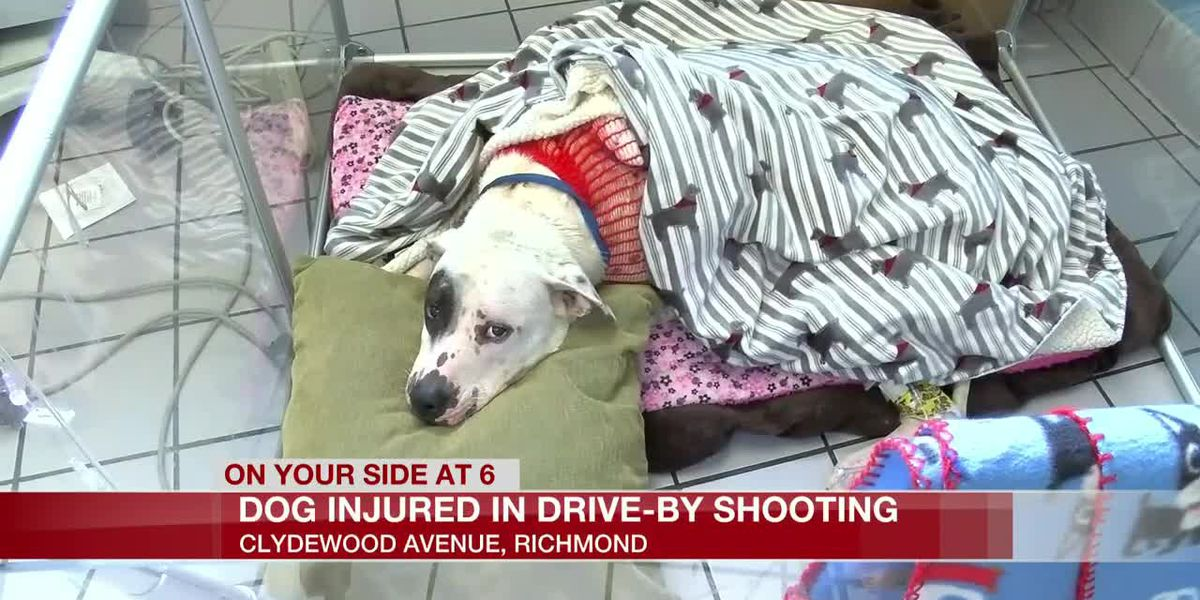 GRAPHIC: Dog shot in drive-by shooting on city's southside