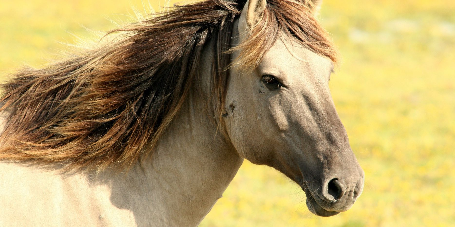 Spring means vaccinating horses against deadly diseases