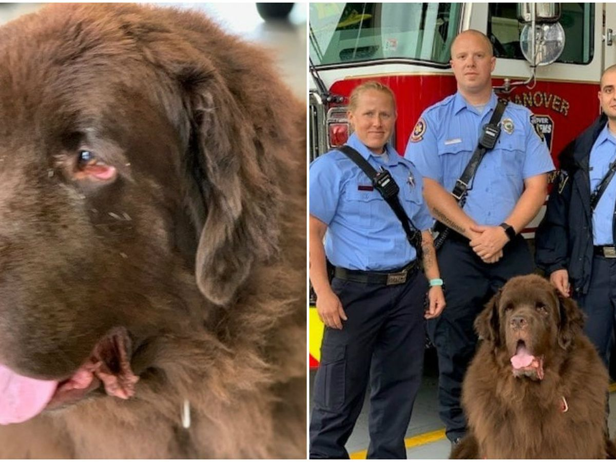 Hanover Fire & EMS make furry friend after rescuing owner