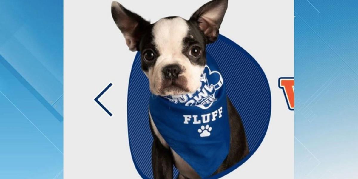 Virginia dog wins Puppy Bowl title