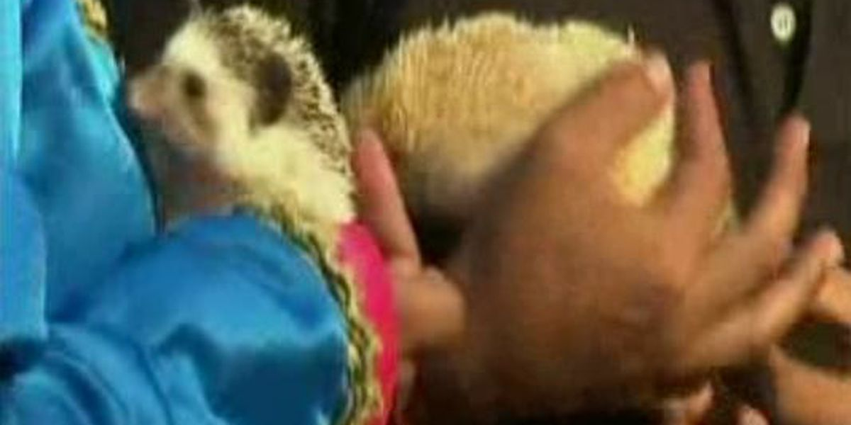 Pets get married in Peru for Valentine's Day